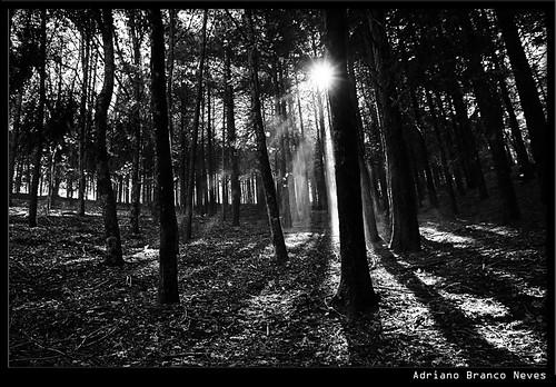 trees bw sunlight forest joydivision serradalousã 123bw aplusphoto adrianobranconeves