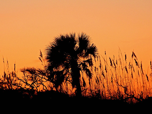 sunset florida palmtree staugustine sanddunes staugustinebeach anastasiaisland anastasiastatepark