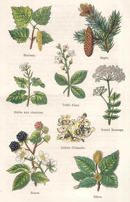 plantes medicinales et alimentaires 1