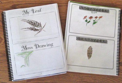 Botany Notebooking Journal 1