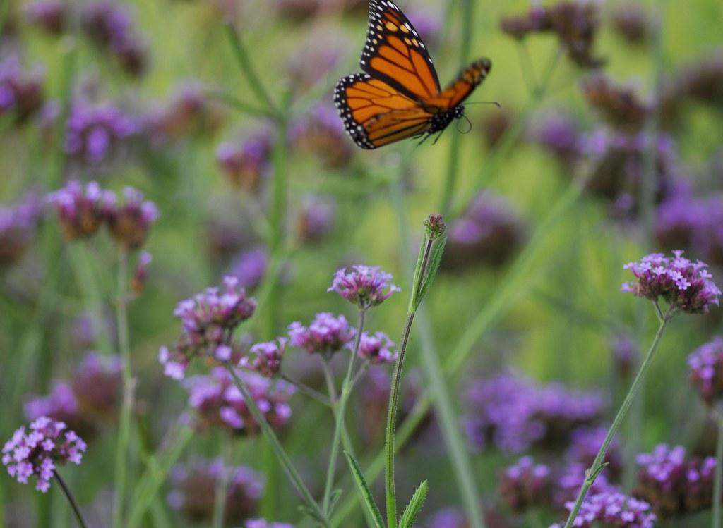 Butterfly flight sequence