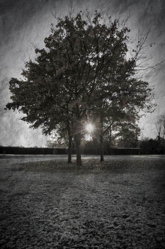 morning winter bw sun snow tree texture ice sunrise eos5d