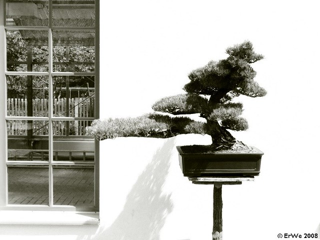 Bad Langensalza Japanischer Garten Bonsai 2008 07 Flickr