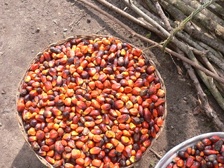 Palm Oil Production   by oneVillage Initiative