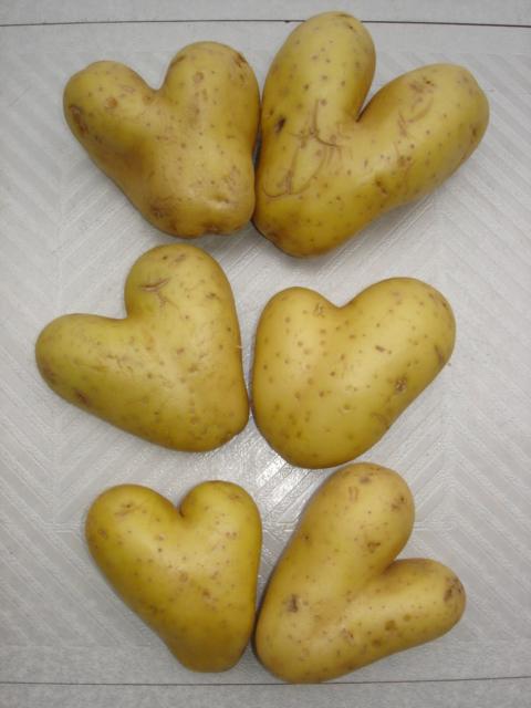 PARIS, Potatoes in Love !