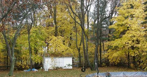 My back yard is yellow