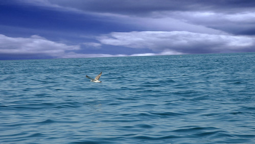 Bird in the middle of the ocean