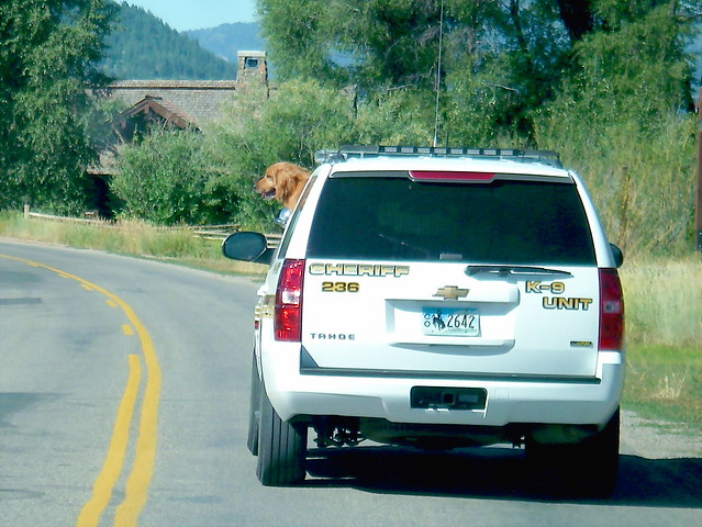 K-9 Unit - Teton County Sheriff Department - Jackson Hole Wyoming