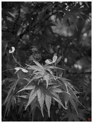 Shrine 081003 #05 | by osanpo