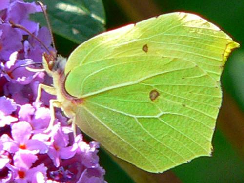 boitier papillon nettoyage