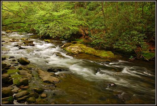 park river nationalpark nc moss rocks northcarolina rhododendron bushes riverrocks greatsmokymountainsnationalpark gsmnp oconalufteeriver oconalufteevisitorcenter tripodphotography nikkor1685vr nd8xfilter