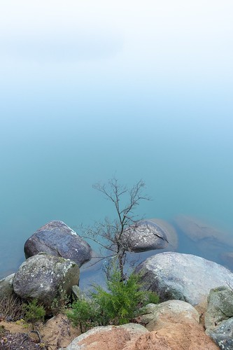 mecklenburgcounty rocks tree winter water mountainislandlake charlotte morning fog northcarolina nature lake landscape