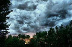 Yard Sunset 2