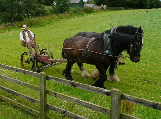 Mowing the Beamish Lawn