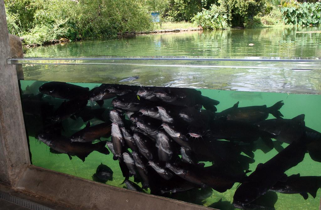 2008-07-25 - Athens, TX - Freshwater Fish Hatchery - 2931