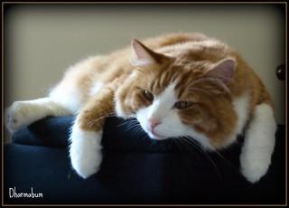 sleeping kitty | by Beatnik Photos