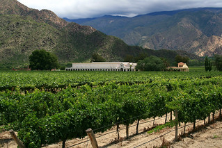 Cafayate Winery | by Tanenhaus