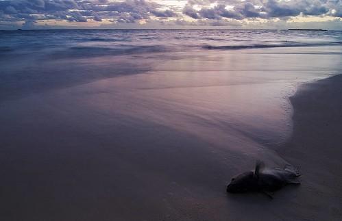 Go Swim in the Tide