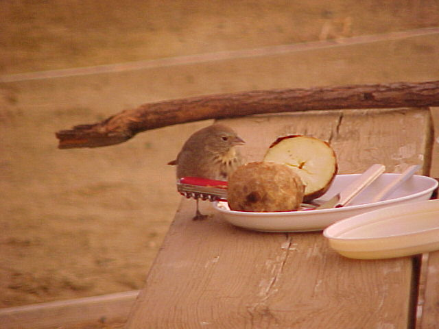 A bird eating a baked potato at the camp ground at Chaco C