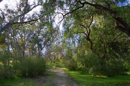 VINC wetland area | by elizabethdonoghue
