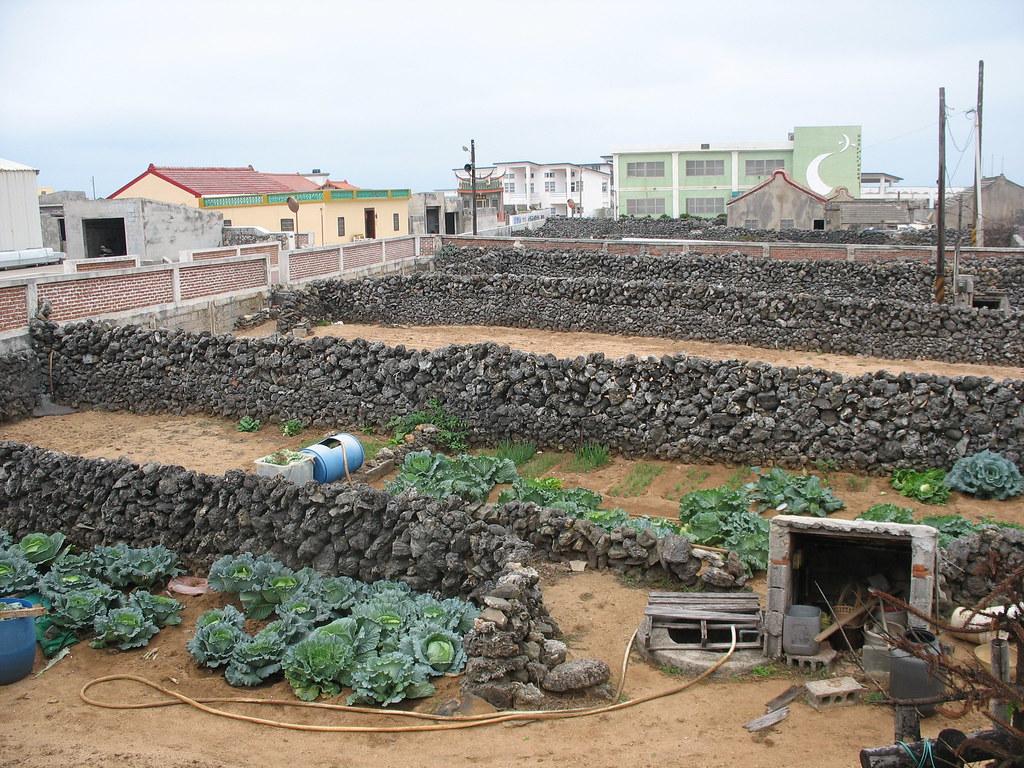 澎湖農業稀少,只剩村落周遭的菜宅。圖為中屯的咾咕石菜宅。本報資料照。