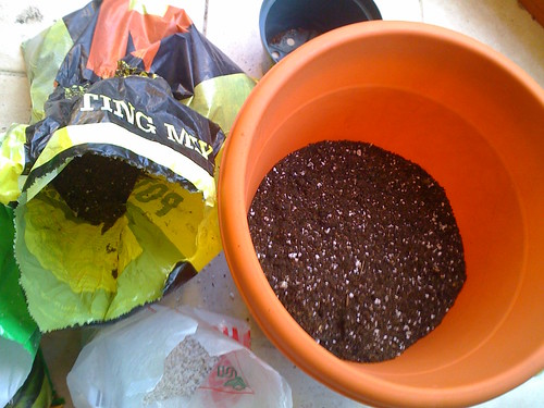 A few inches of new soil | by Tara Severns