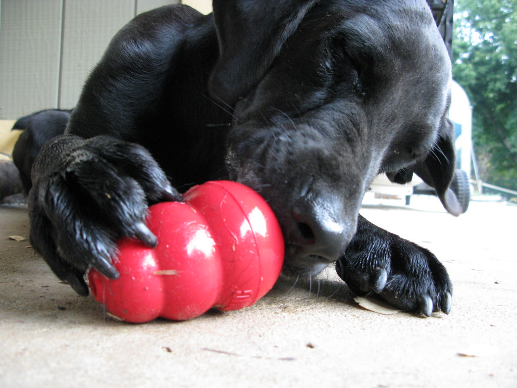 Just one more lick! | Holding her Kong with one strong paw, … | Flickr