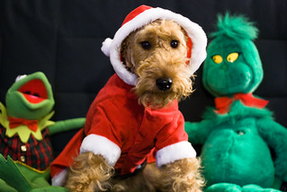 Merry Christmas from Harper, Kermit, and the Grinch   by jadamsowers.net