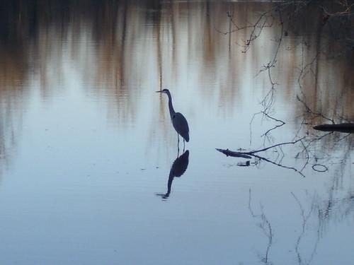 sunset bird louisiana swamp egret lakefaussepoint