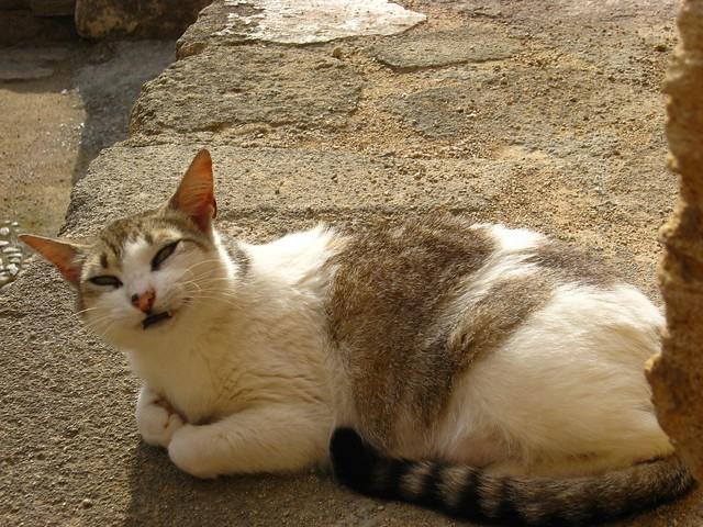 Happy cat smiling - Castell de Capdepera (Capdepera Castle) - Capdepera, Mallorca