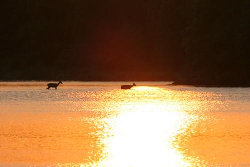 sunset sun lake 20d nature water canon geotagged warm deer 400mmf56l geo:tool=gmif caseymorris geo:lat=30018645 geo:lon=95173488 geo:lat=30022240 geo:lon=95168595