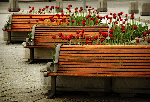 Tulips & Benches