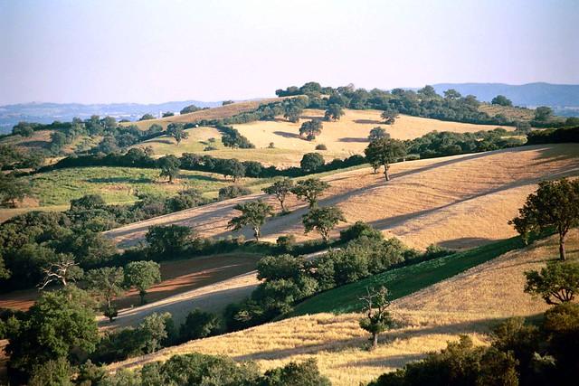 Le colline Maremmane - Maremma's hills