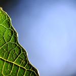 Leaf 'n Sky