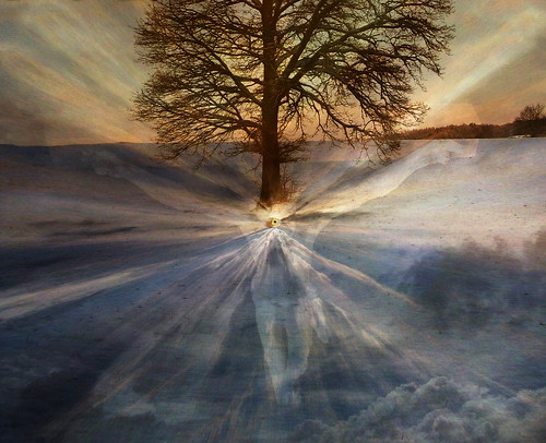 Tree of Truth | by h.koppdelaney