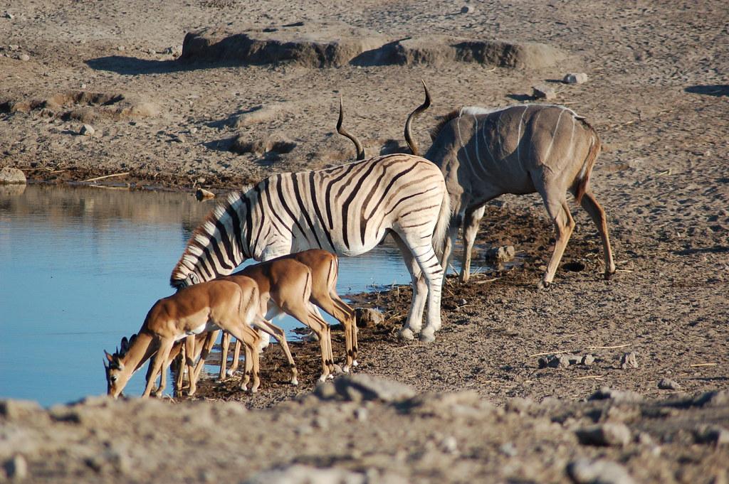 """Résultat de recherche d'images pour """"Etosha Park namibia"""""""