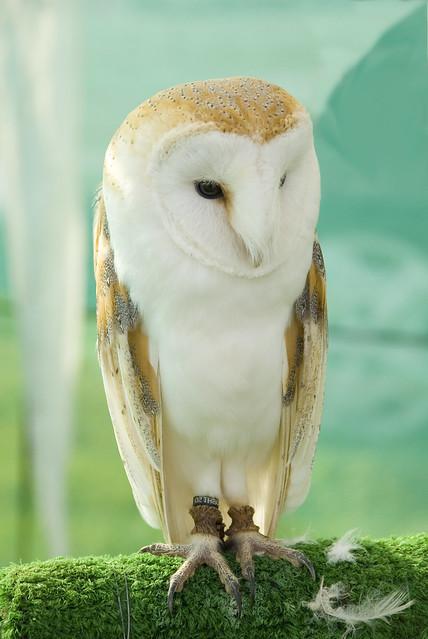 Owl - DSC_0418