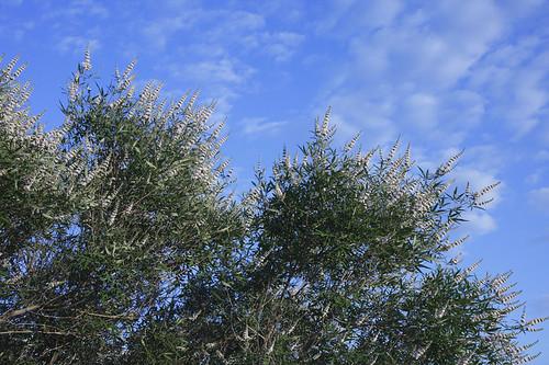 arizona scottsdale picturesque naturewatcher natureselegantshots coxheights jhaskellus jhaskell jackhaskell