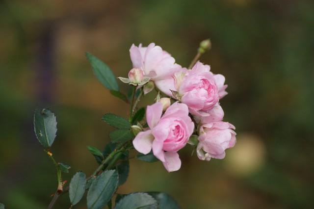 Sweet pink memories from Nuremberg