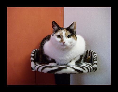 Kedi - Cat - Katze | by saidnursi