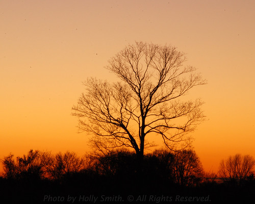 statepark pink trees ohio orange tree nature birds silhouette nikon colorful searchthebest branches peach silhouettes waynesville caesarcreek warrencounty tamron28300 caesarcreekstatepark harveysburg d80 nikond80 geotaggedohio waynesvilleoh harveysburgoh hollyannsmith photobyhollyannsmith