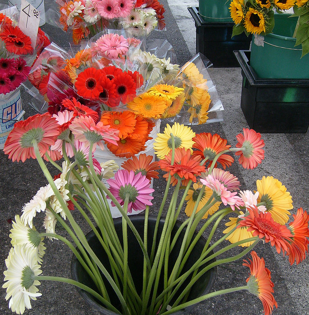 Gerberas at the Farmer's Market