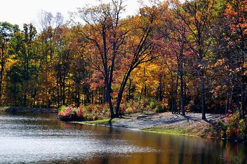 fall landscape d90 saffinspond