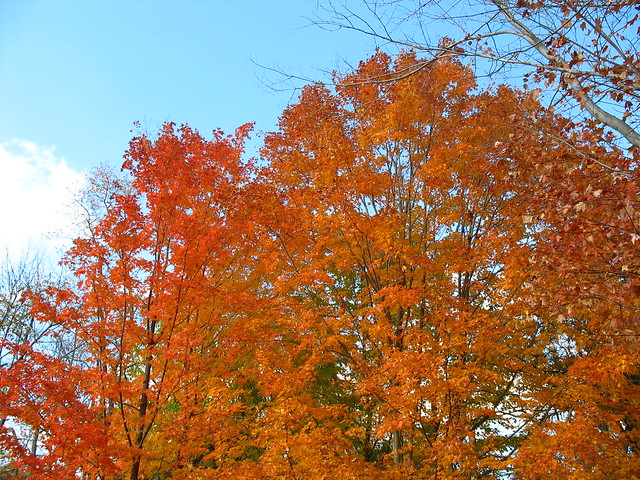Fall foliage at Sunset Circle