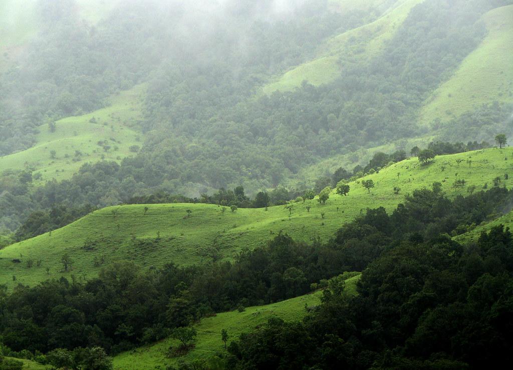 Kudremukh, Shola Grasslands. by wildxplorer