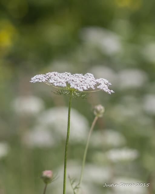 NY Weeds 2