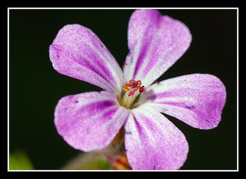 Sparkly flower   by veggiesosage