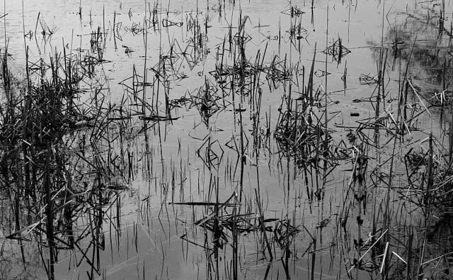 HC  pond reflections