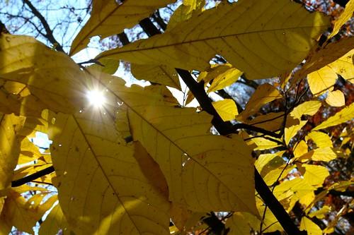 Waning Sunlight | by thegreatsunra