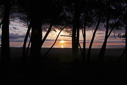 morning light shadow italy beach pine forest sunrise island coast mediterranean sardinia east barisardo